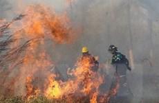 Hỏa hoạn vẫn tiếp tục lan rộng tại Bolivia, thiêu rụi 2 triệu ha rừng