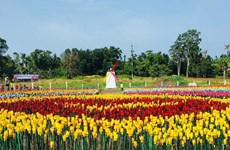 Rực rỡ vườn hoa tulip làm từ rác thải nhựa tại Philippines