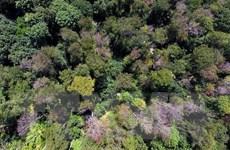 Nhiều 'đại gia' hàng tiêu dùng lỡ mục tiêu về chống phá rừng