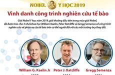 [Infographics] Nobel Y học 2019 vinh danh công trình nghiên cứu tế bào