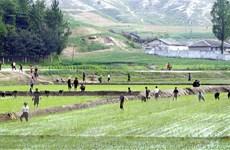 FAO kêu gọi hành động để giảm lượng lương thực lãng phí mỗi năm