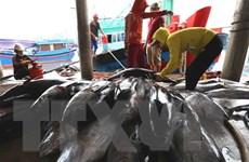 Khắc phục 'thẻ vàng' IUU: Tăng cường kiểm tra tàu cá cập, rời cảng