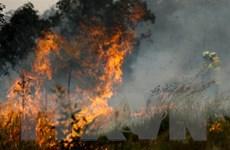 Cháy rừng lan nhanh tới gần khu vực trung tâm của thành phố Sydney