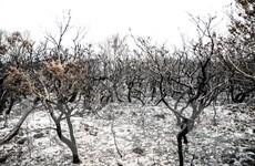 Cháy rừng ở Australia: Thêm hàng chục ngôi nhà bị phá hủy