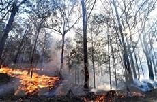 """Australia: Tạm khống chế """"giặc lửa"""" nhờ những cơn mưa"""