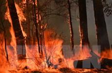 Nắng nóng kỷ lục và cháy rừng thảm khốc đe dọa Nam Australia
