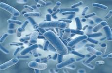 Nghiên cứu mới: Phát triển loại vi khuẩn chỉ 'ăn' khí CO2