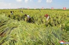 FAO: An ninh lương thực của Triều Tiên khó cải thiện trong năm 2020