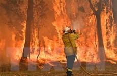Thảm họa cháy rừng gây hậu quả nghiêm trọng tại Australia