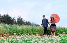 [Video] Lễ hội hoa tam giác mạch - sắc hồng trên cao nguyên đá