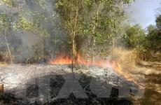 Bình Phước: Lửa bùng phát dữ dội thiêu rụi gần 10 hécta rừng tràm