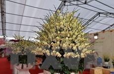 Đa dạng nhiều loại hoa Tết với giá hợp lý, lan Hồ Điệp 'hút khách'