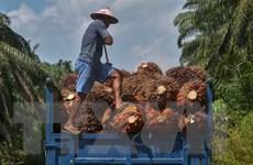 Khảo sát của WWF: Châu Á 'tụt hậu' trong xu hướng xanh của thế giới