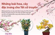 [Infographics] Những loài hoa, cây đặc trưng cho Tết cổ truyền
