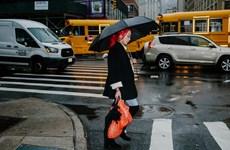 Thành phố New York cấm sử dụng tất cả các loại túi nylon