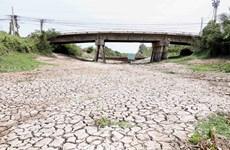 Hình ảnh kênh mương nứt nẻ, cây trồng khô héo ở Tiền Giang