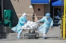 Dịch COVID-19 tại châu Mỹ: Mỹ ghi nhận thêm gần 1.900 ca tử vong
