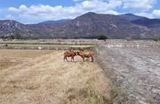 Xuất cấp hạt giống cây trồng cho hai tỉnh bị ảnh hưởng hạn hán