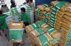 Không có ca mắc mới COVID-19, Campuchia nối lại xuất khẩu gạo