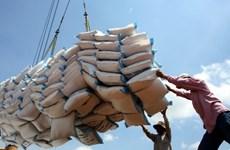Doanh nghiệp không ký hợp đồng gạo dự trữ tiếp tục đi đấu thầu lần 2