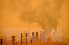 Tần suất cháy rừng thảm khốc ở Australia có chiều hướng gia tăng