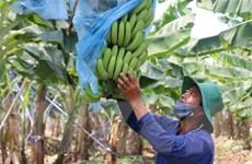 Kết nối giao thương hàng nông sản, thực phẩm Việt Nam-Trung Quốc
