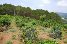 Hàng trăm hécta rừng ở Lâm Đồng 'biến mất' do quản lý lỏng lẻo