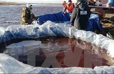 Sự cố tràn dầu ở khu vực Bắc Cực: Dầu đã loang đến hồ Pyasino