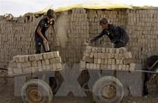 Hơn 152 triệu trẻ em phải lao động để kiếm sống qua ngày