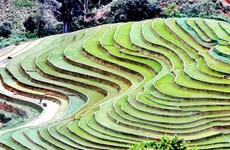 [Photo] Ruộng bậc thang - bức tranh nghệ thuật nơi vùng núi Sơn La