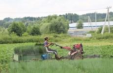 Hình ảnh những người nông dân Việt Nam trồng rau trên đất Nga