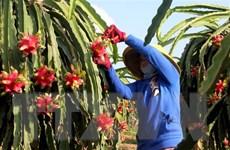 Hiệp định EVFTA mở ra cơ hội kinh doanh cho Bỉ và Việt Nam