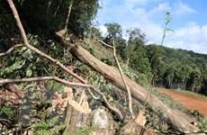 Kon Tum: Phát hiện, ngăn chặn kịp thời vụ phá rừng nguyên sinh