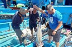 Gắn kết tiêu thụ cá ngừ đại dương tại thị trường nội địa