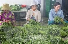 Nâng tầm nông sản ở các vùng chuyên canh tại Tiền Giang