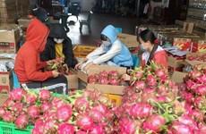 Đắk Lắk: Thanh long ứ đọng, rớt giá khiến nông dân lao đao
