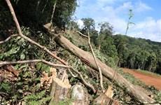 Lâm Đồng: Thanh tra toàn diện các dự án rừng ở huyện Bảo Lâm