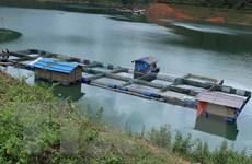 Lai Châu: Hướng đi mới từ nuôi cá lồng trên lòng hồ thủy điện