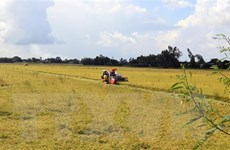 Cấp chứng nhận đăng ký nhãn hiệu 'Lúa sinh thái Cà Mau'