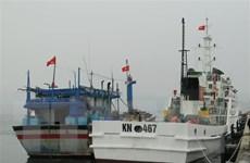 Đưa 11 ngư dân trên tàu cá Bình Định về đất liền an toàn