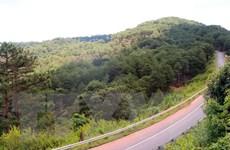 Giai đoạn 2015-2019, diện tích rừng miền Trung tăng gần 374.000ha