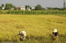 Nhật Bản sẵn sàng hợp tác nâng cao thương hiệu cho gạo Việt Nam 