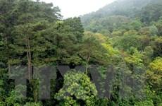 Vĩnh Phúc: Tăng diện tích rừng trồng gỗ, bảo vệ rừng phòng hộ