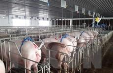 Cơ hội nào cho ngành chăn nuôi của Việt Nam trong EVFTA?