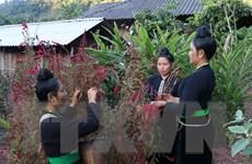 Độc đáo sắc màu văn hóa trong Tết Hoa mào gà của đồng bào dân tộc Cống