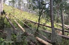Bảo vệ rừng vùng giáp ranh 3 tỉnh Quảng Nam, Quảng Ngãi và Kon Tum