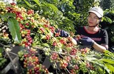 Thị trường nông sản tuần qua: Giá càphê bật tăng trở lại