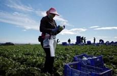 Gia tăng chênh lệch thu nhập giữa lao động nhập cư và lao động bản địa