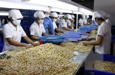 Hà Lan đầu tư 250 triệu USD phát triển thương hiệu điều Bình Phước