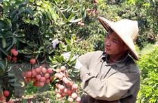 Xuất khẩu nông, lâm, thủy sản giữ vững mục tiêu 41 tỷ USD